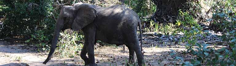 Day Mkumi Safari